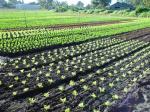 Title: Seedlings